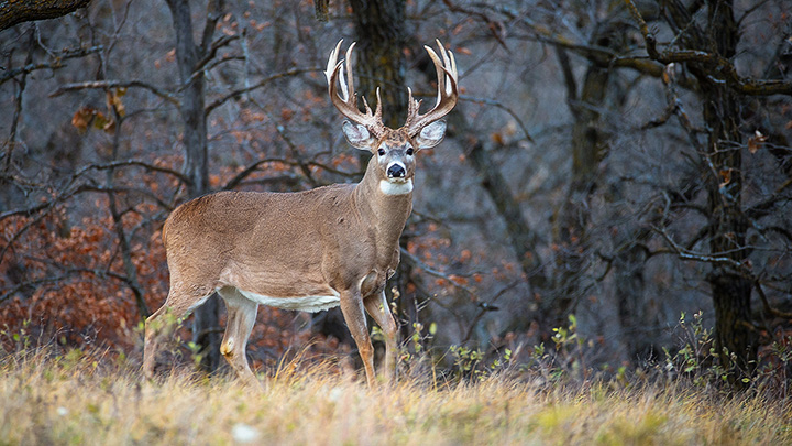 Trophy Deer Hunts