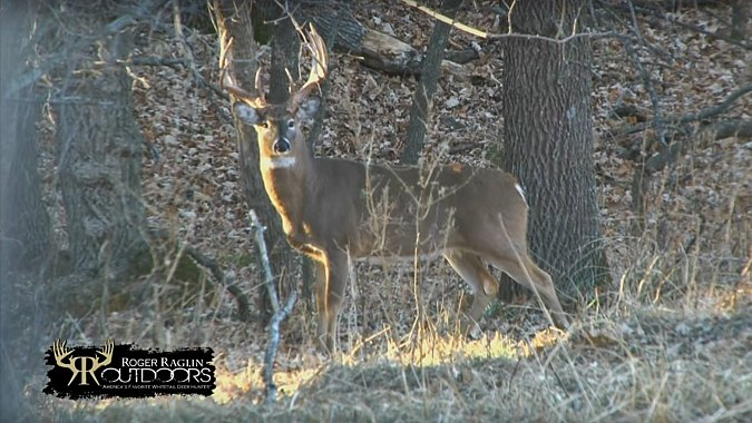 Roger Raglin Deer Hunt at Dragon Creek Ranch - Part 1