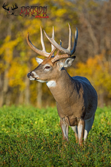 Premier trophy whitetail hunting ranch