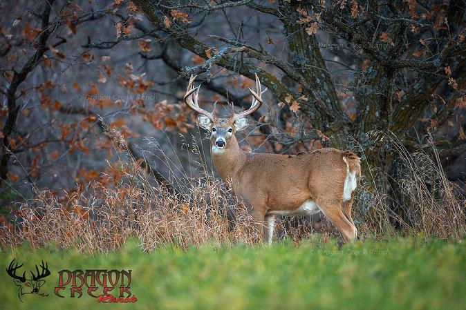 North Dakota Deer