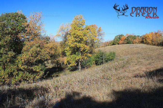 Ranch Edge Habitat